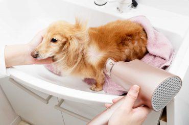 Teach your kids about proper pets care: