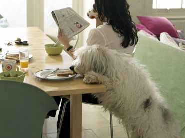 Tips For Keeping Your Pets At A Healthy Weight