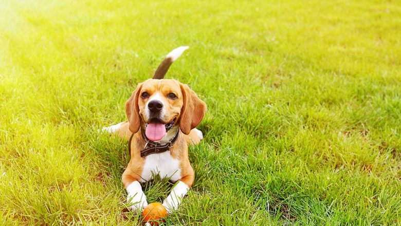 Things you concentrate for keeping your dog's health condition to be good