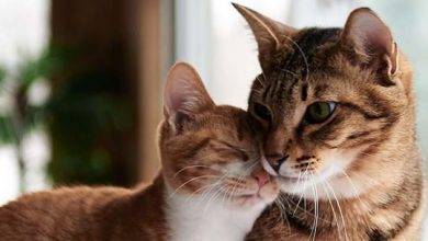 Understanding the Importance of Grooming Tools for Cat