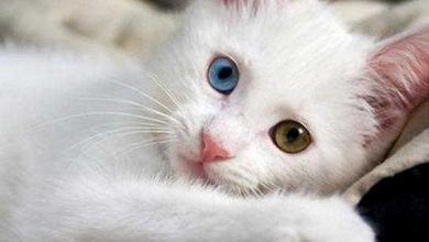 Cat Eye Drops You Need To Know About?