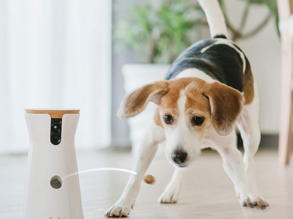 Facts About Owning A Pet At Home: Pet Camera