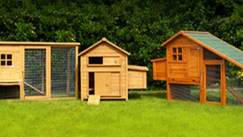 Pros and Cons Of Creating Your Own Chicken Coop