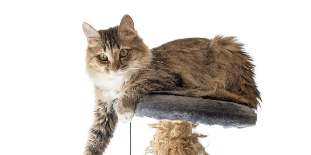 good cat trees for large cats