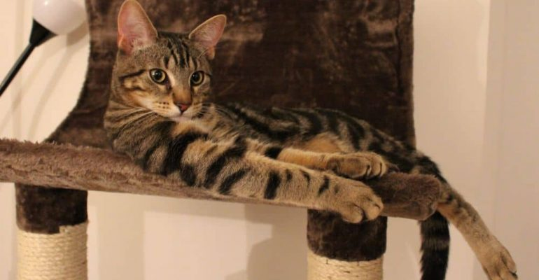 Make Better Space for your Cats with Cats Tree