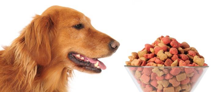 WESTMINSTER DOG