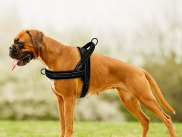 Dog Harness – Make the Right Choice for Your Canine