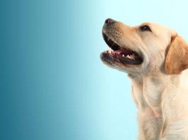 Dog Grooming: A Essential Maintenance For Dogs