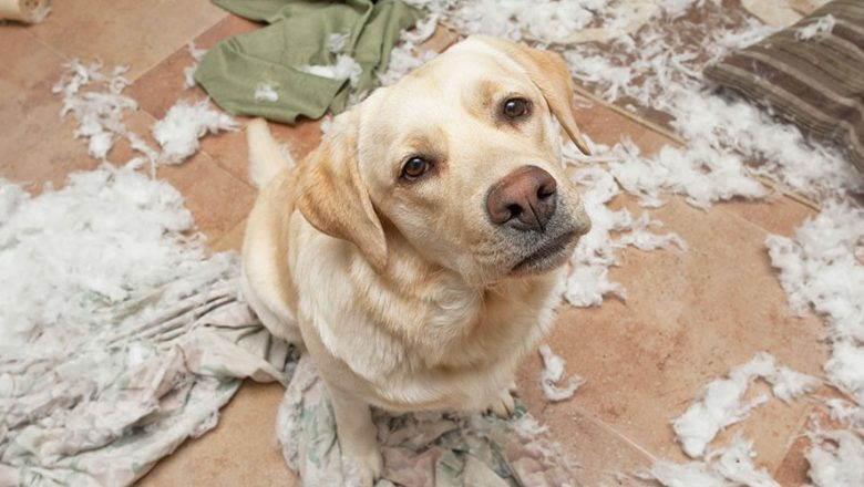 6 Ways to Treat Dog Separation Anxiety