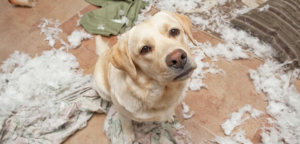 Dog Separation