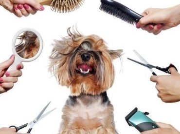 Know About Cat grooming near me