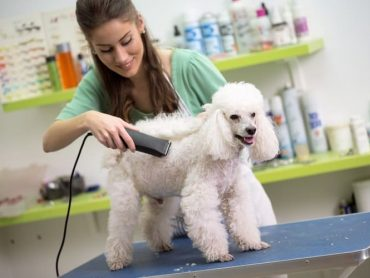 How to Groom Your Pet Perfectly At Home