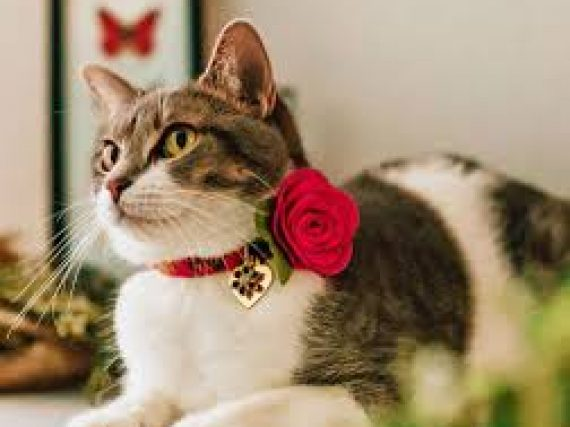 How to choose the right Cat Collars?
