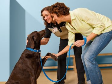 A Beginner's Guide on Training a Dog