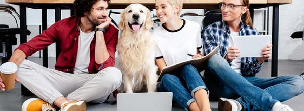 5 Tips for Choosing the Proper Pet Sitting Service