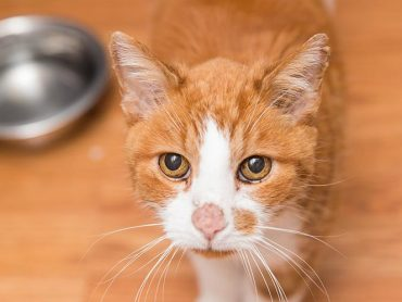 How To Care for a Cat Diagnosed with Diabetes