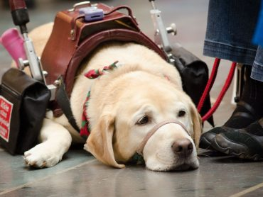 How do you obtain an emotional support animal?