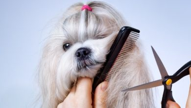 Choose Professionals At Pet Grooming Pembroke Pines