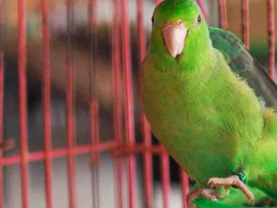 The Best Species of Parrots to Have as First-Time Pets