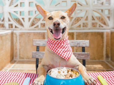 Dry Dog Foods with Good Quality for Your Healthy Dog