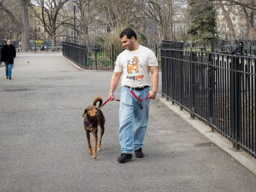5 Things You Should Be Concerned About Dog Walkers
