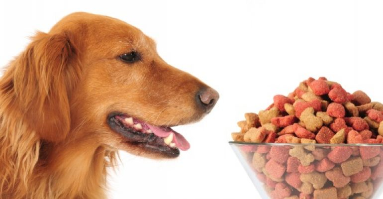 Which One Of The Many Dry Dog Food Brands Is The Best?