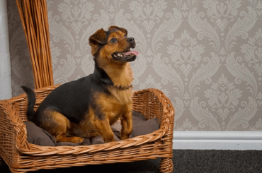 Select The Best One Wicker Dog Beds