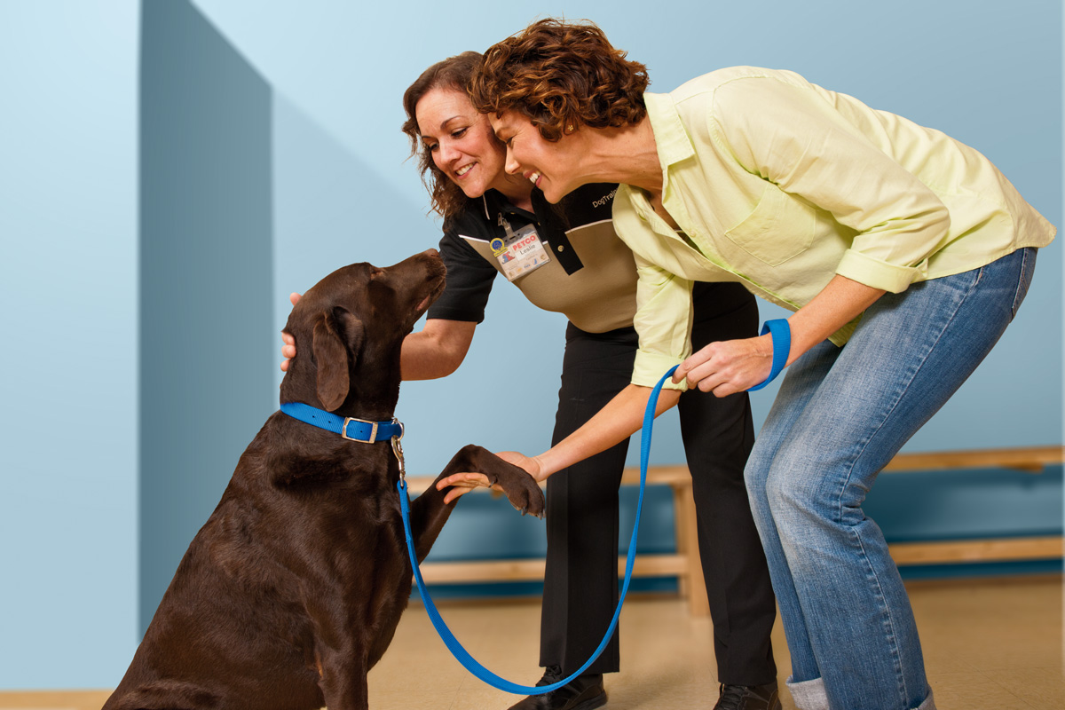 A Beginner's Guide on Training a Dog | Place for dog lovers