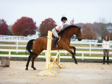 Helping Your Horse Lose Those Extra Pounds