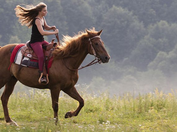Don't Get Taken for a Ride When Buying Your First Horse