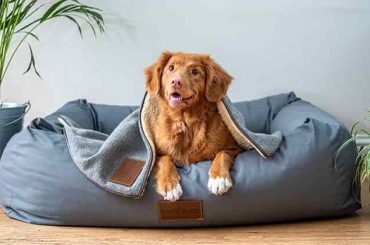 Tips On Choosing The Right Dog Bed