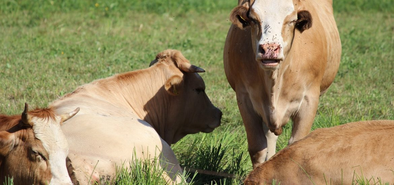 Organic Livestock Measures
