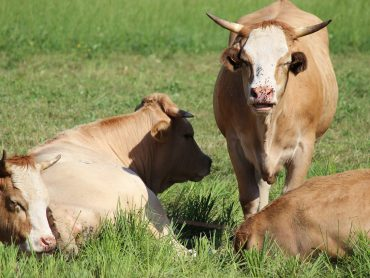 Organic Livestock Measures – Committed To Animal Welfare