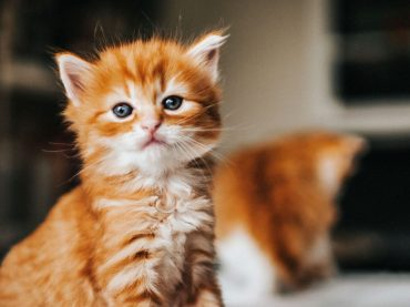 Insight Into the Mobile Pet Grooming Hialeah